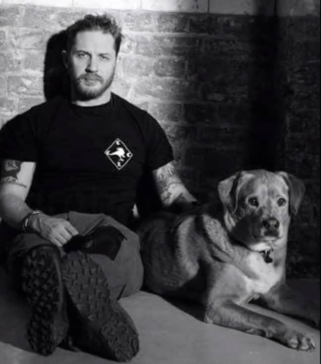 Tom Hardy's dog woodstock