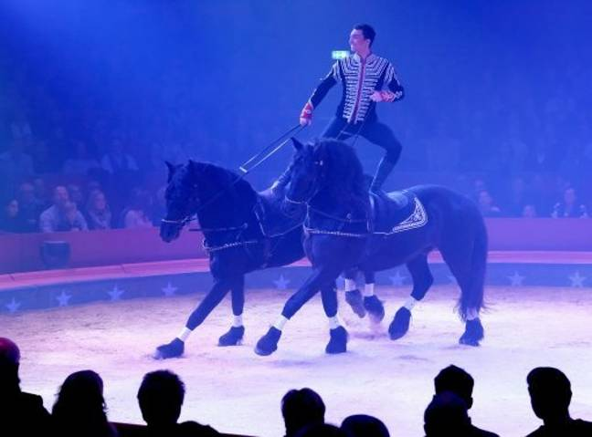 Horses in the Swiss national circus Brothers Knie. Credit: PA
