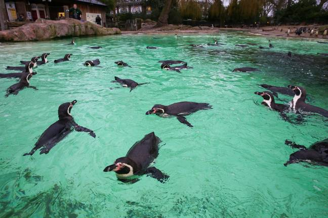 Zoos and safari parks are set to reopen from 15 June. Credit: PA
