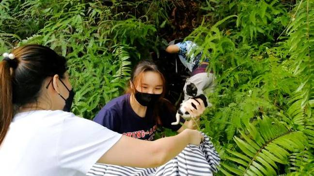 Locals were able to scare the monkey. Credit: ViralPress via Newsflare