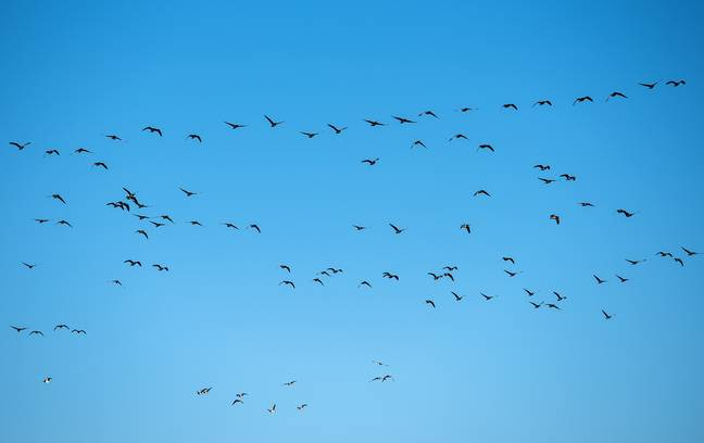 Hundreds of birds reportedly fell from the sky in Wales. Credit: PA