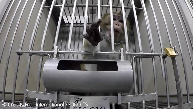Credit: CEN/Cruelty Free International