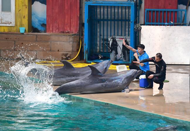 There is a growing opposition to using marine mammals in performances. Credit: PA