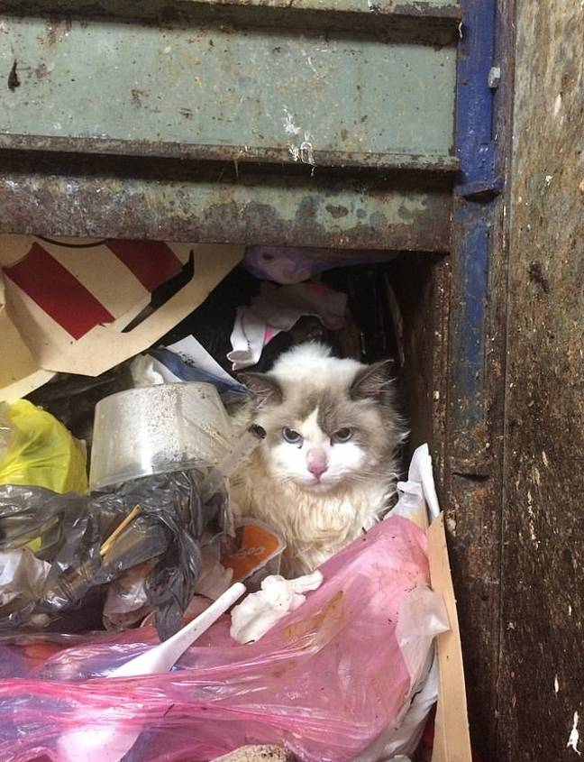Hibala was found at the bottom of the seven-storey chute. Credit: RSPCA