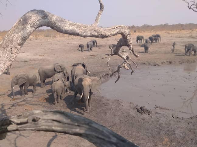 Elephants at Hwange National Park. Credit: Zimparks