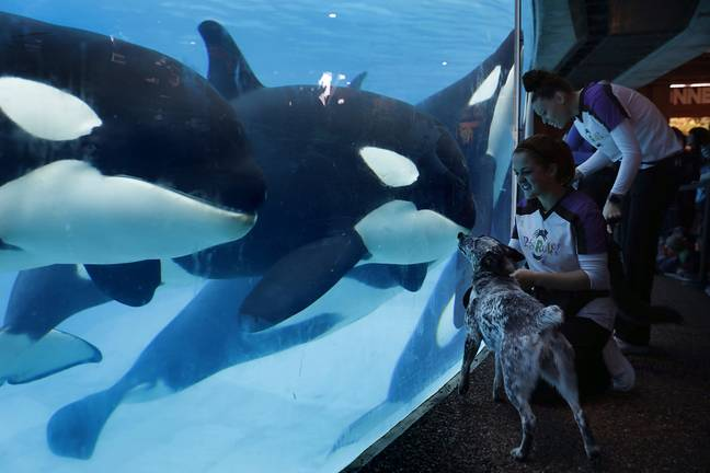 Virgin Holidays is scrapping trips to SeaWorld. Credit: PA