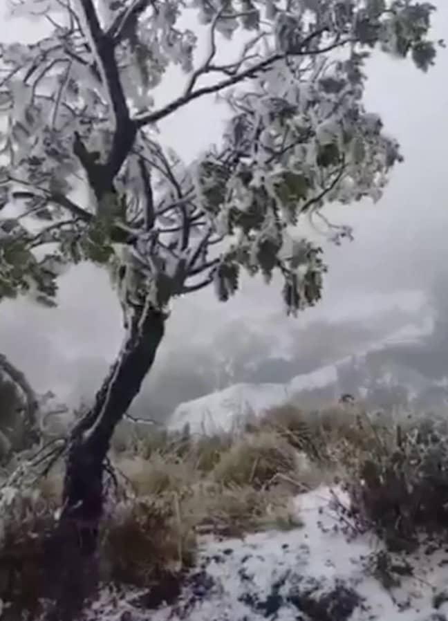 Snowfall in Hawaii. Credit: EPA