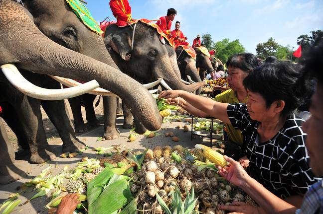 People feed elephants in Thailand on National Elephant Day. Credit: PA