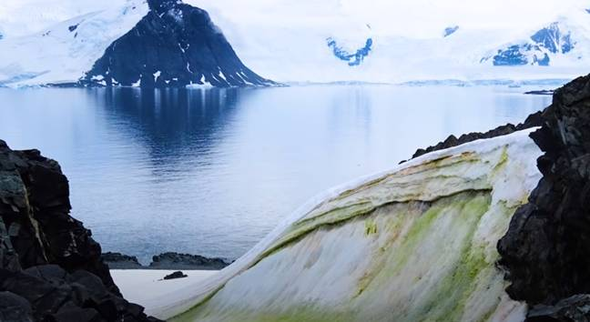 Climate change will cause parts of Antarctica to turn green, scientists say. Credit: University of Cambridge