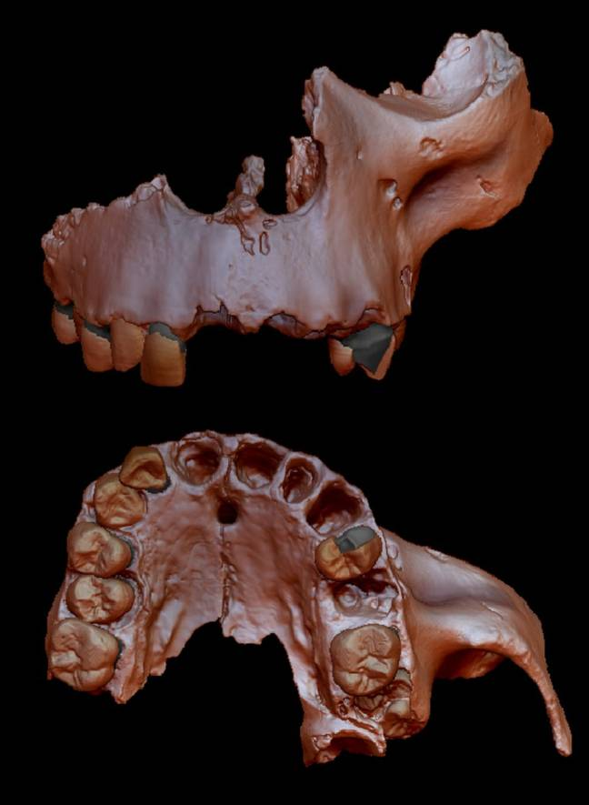 A digital recreation of the Homo antecessor fossil. Credit: Prof. Laura Martín-Francés