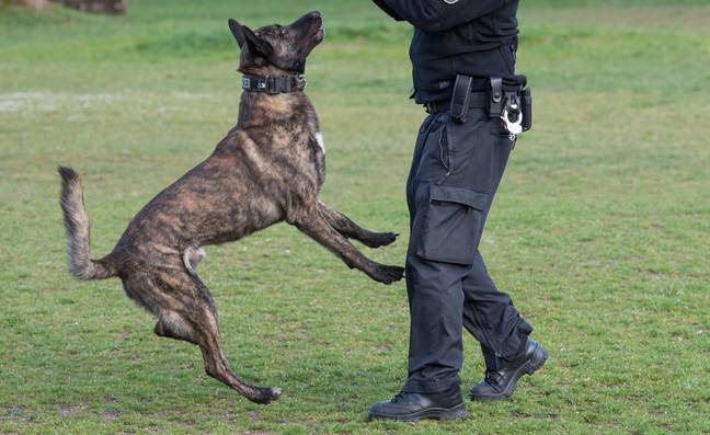 A modern police officer trains a bomb detection dog. Credit: PA