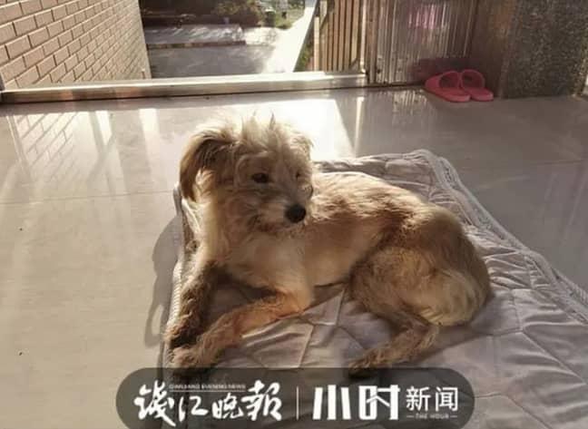 Credit: Qianjiang Evening News