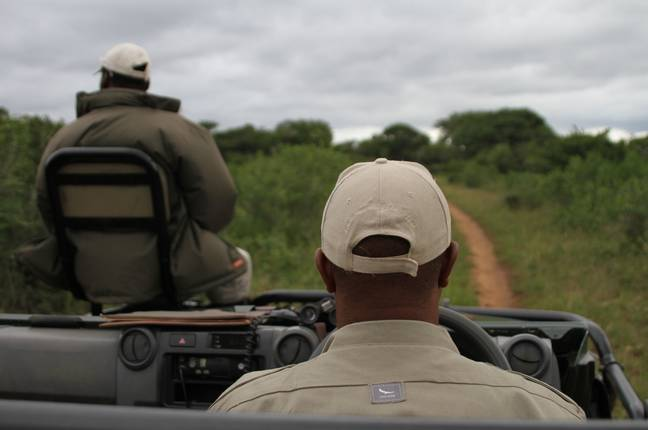 Scouts look for white rhinoceros in the Phinda Private Game Reserve in South Africa. Credit: PA