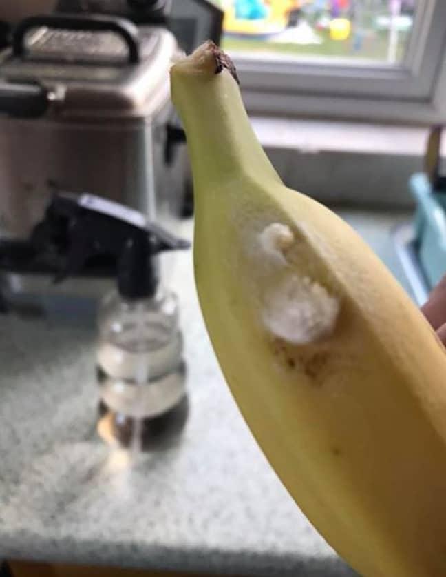 Keeley Ballard's bananas had spider eggs strewn across them. Credit: Keeley Ballard/John Siddle