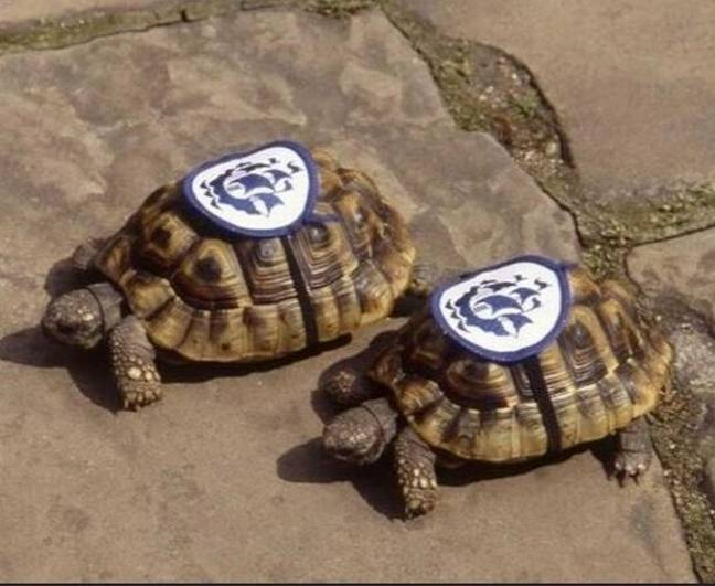 Fred and Frieda, the Blue Peter tortoises. Credit: BBC