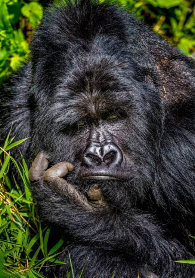 Credit: Marcus Westberg / Comedy Wildlife Photography Awards