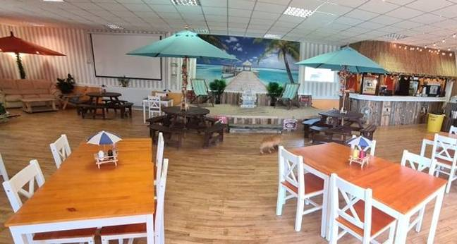 The cafe will have a tropical beach theme, because why not? Credit: Alfie's Island Cafe