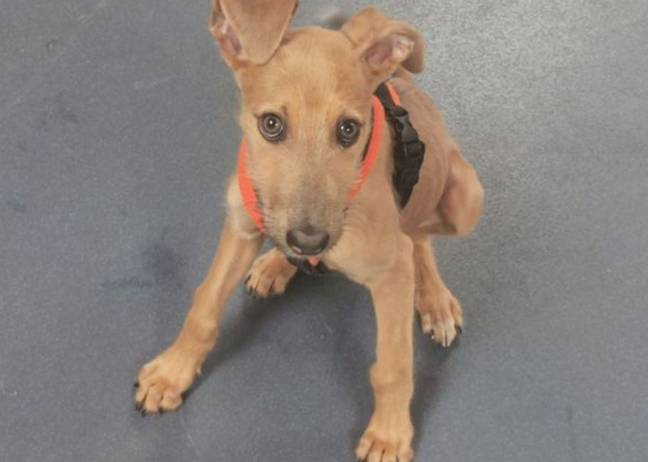 Nala is one of the dogs who has been abandoned. Credit: RSPCA