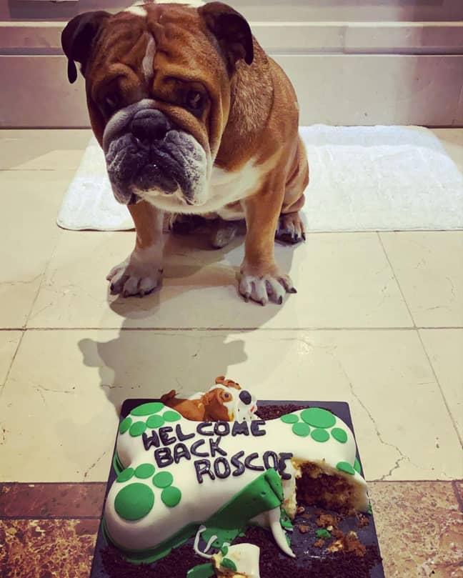 Roscoe with his cake. Credit: Instagram/@roscoelovescoco