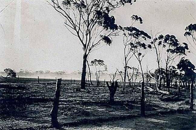 Some of the damage caused by emus. Credit: Pickering Brook Heritage