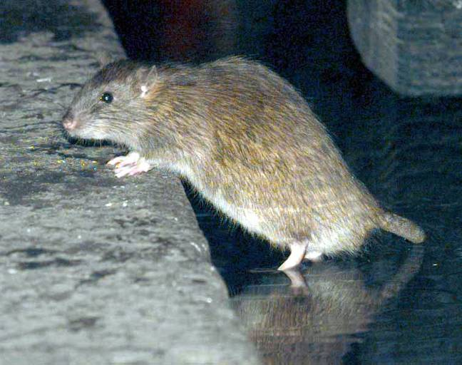 The rats 'chewed' on her legs and arm. Credit: PA