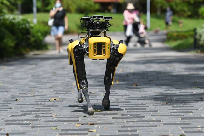 Another of the 'Spot' robot dogs. Credit: PA