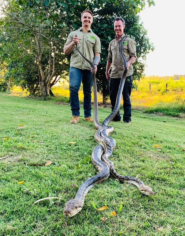 Jason Legg and Matt Hagan from Cairns Snake Catcher. Credit: Cairns Snake Catcher