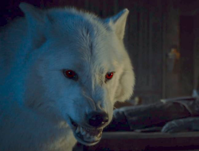 'Game Of Thrones' Director Answers Season 8 Questions Saying Who Lives Credit: HBO