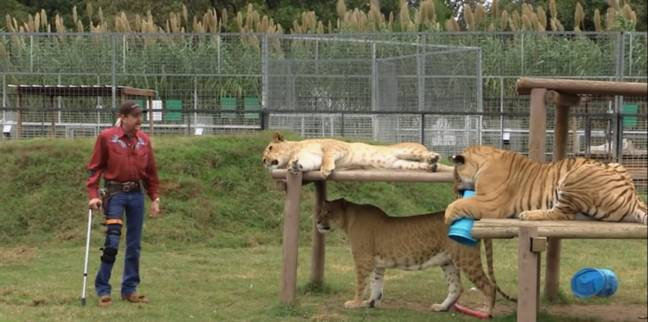 Greater Wynnewood Exotic Animal Park is being investigated following animal welfare complaints. Credit: Netflix