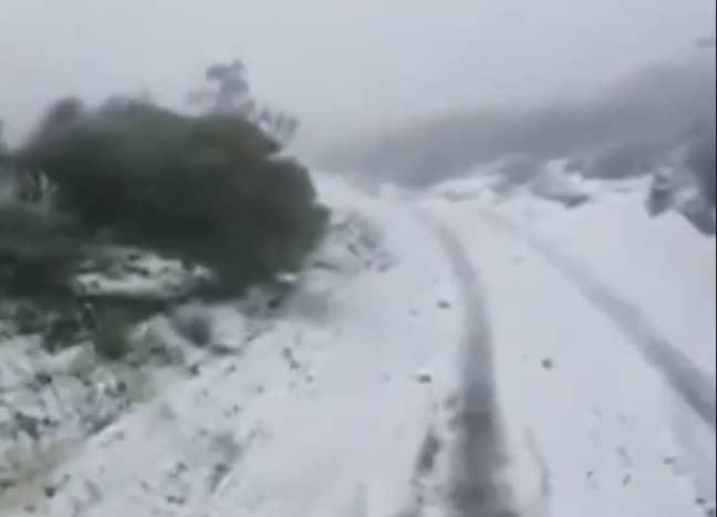 Snowfall in Hawaii. Credit: 9News
