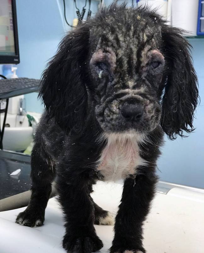 The pup needed weeks of treatment. Credit: Sussex Police