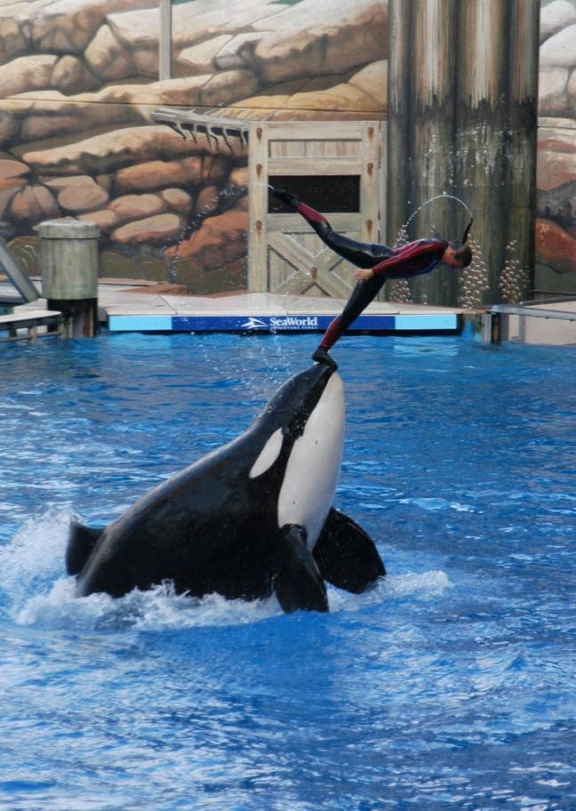 TripAdvisor said they want companies to stop forcing animals to perform tricks. Credit: PA