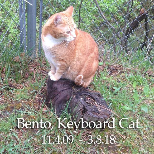 RIP, Bento. Credit: Facebook/Keyboard Cat