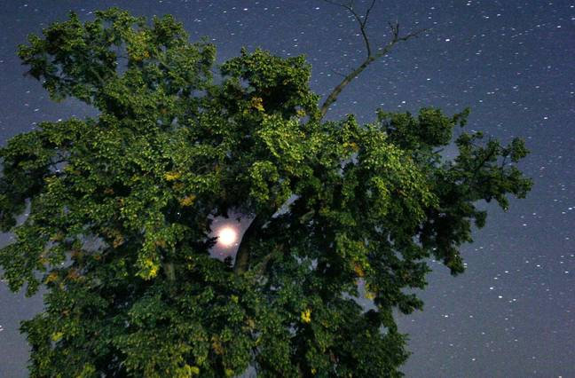 Mars pictured through the branches of a tree in Germany, late 27 August 2003 - at its closest point to Earth in 60,000 years. Credit: PA