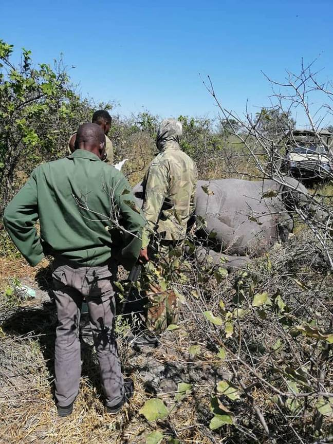 Officials investigate the dead elephants. Credit: Botswana Safari News