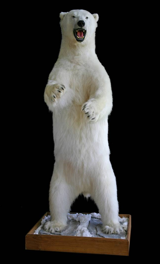 The stuffed polar bear was a number of strange animal pieces that were bought during the auction. Credit: SWNS