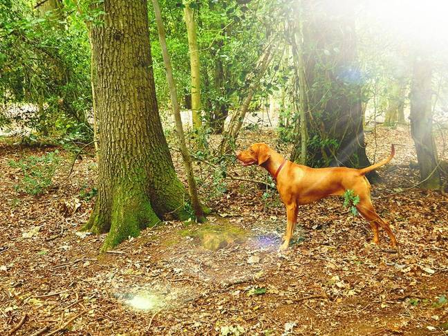 Mali in the woods. Credit: Facebook/Dudes & Dogs