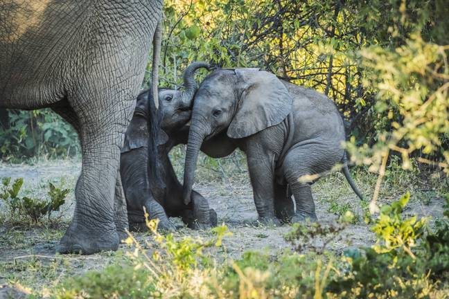 Elephants of all ages and sexes have been found dead. Credit: PA