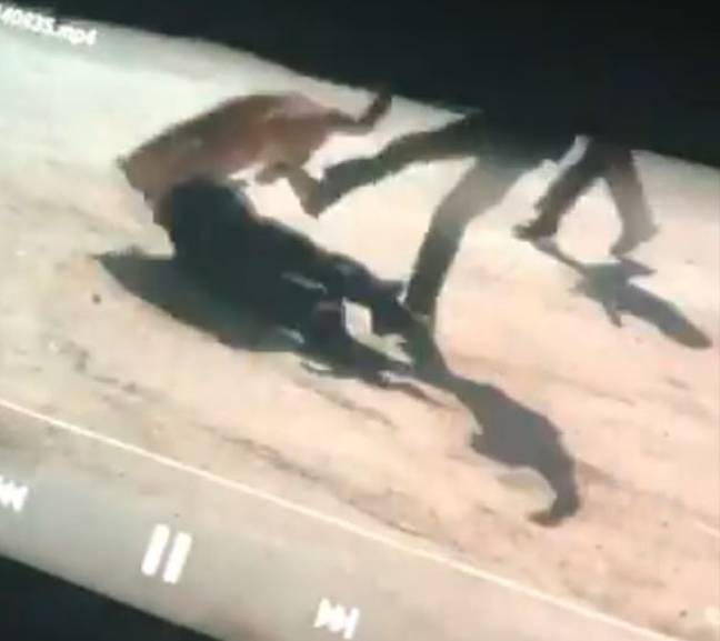 One of the other officers kicked the lion which caused it to run away. Credit: Fox 31