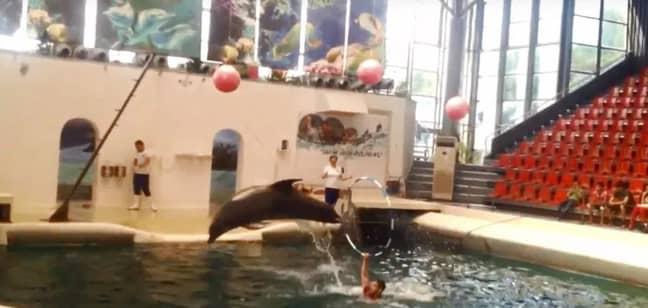 Dolphins perform at the Varna Dolphinarium. Credit: Amanda Viajando