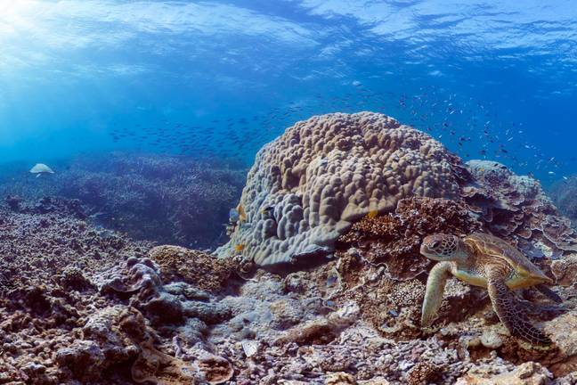 The Great Barrier Reef Marine Park Authority (GBRMPA) has stood up to its boss. Credit: The Ocean Agency / Xl Catlin Seaview Survey
