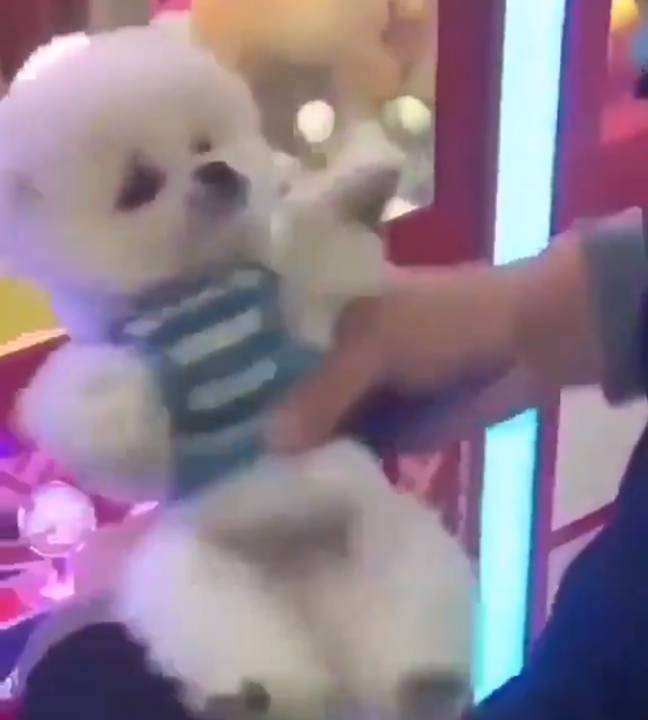 A person can be seen holding one of the dogs at the end of the video. Credit: Twitter/Daniel Schneider