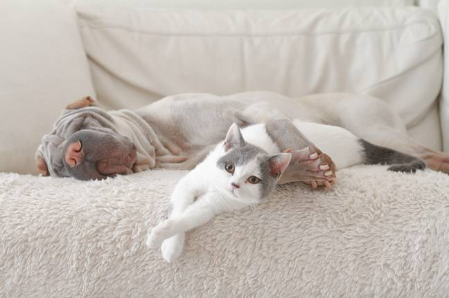 Humans can develop 'sentimental bonds' with their furry companions. Credit: Alamy