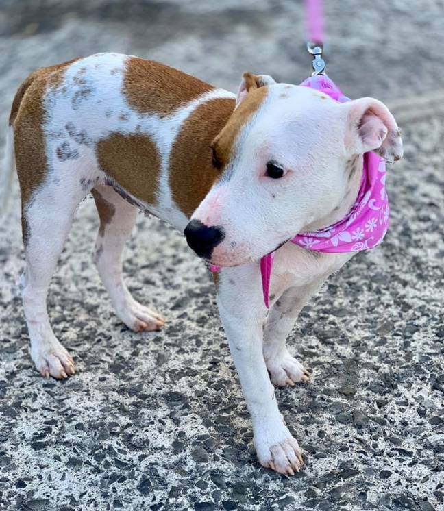 Leiahola has since made an incredible recovery. Credit: PAWS Hawaii