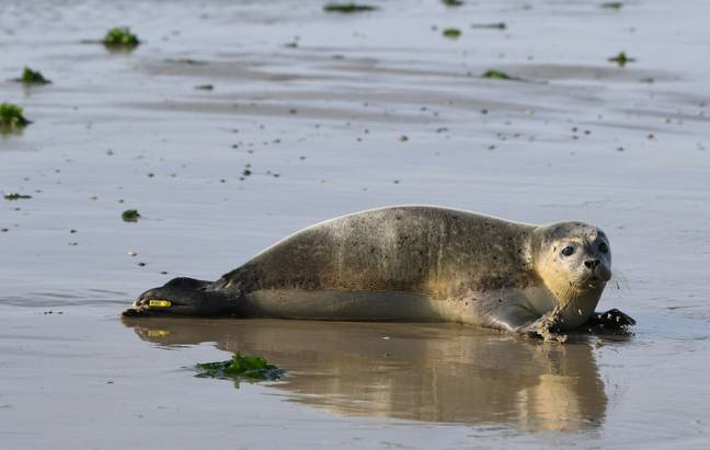 Stock image of a seal. Credit: PA
