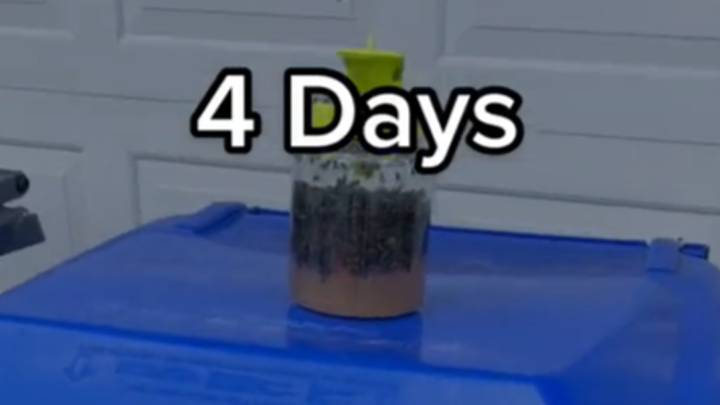 Man's Four Day Test Of Fly Trap Has Seriously Impressive Results