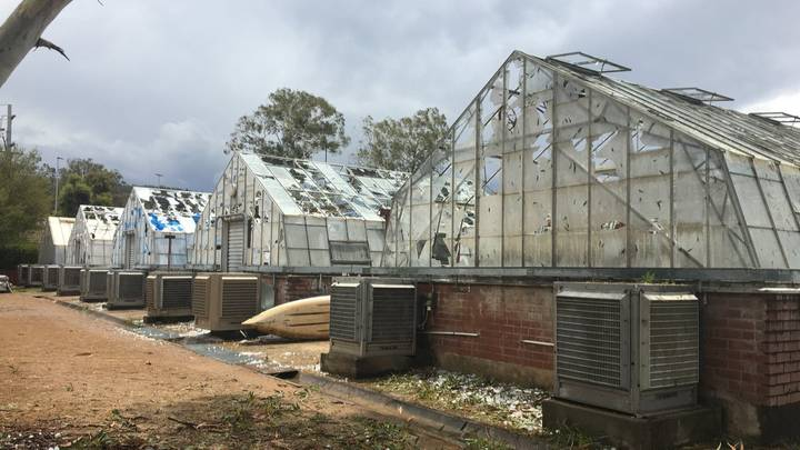 Years Of Research Lost After Golf Ball Sized Hailstones Smash Greenhouses