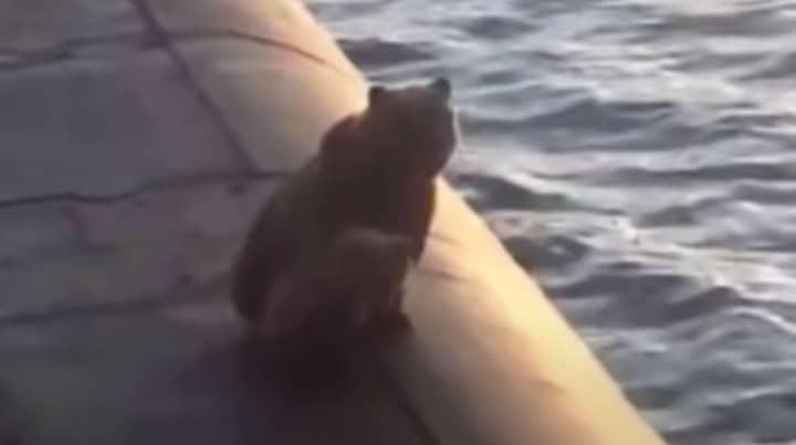 Backlash After Bear And Cub Shot By Russian Navy