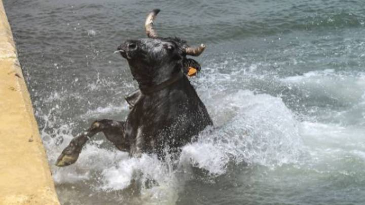 Bulls Are Chased Into The Sea In Spain As Crowds Taunt Them Into The Water