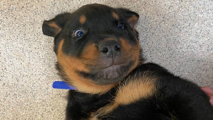 Abandoned Blind Puppy Found Wandering In Park Gets New Home